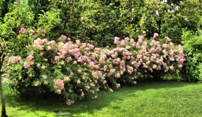 Vendita piante e fiori zanetti piante for Vendita piante e fiori